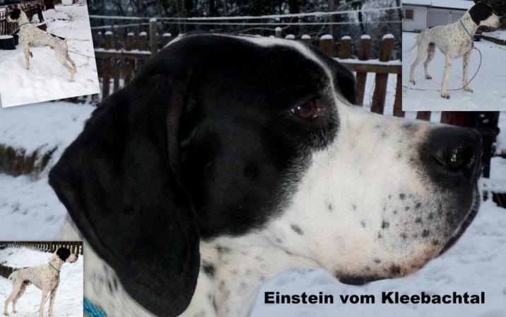 Einstein Vom Kleebachtal