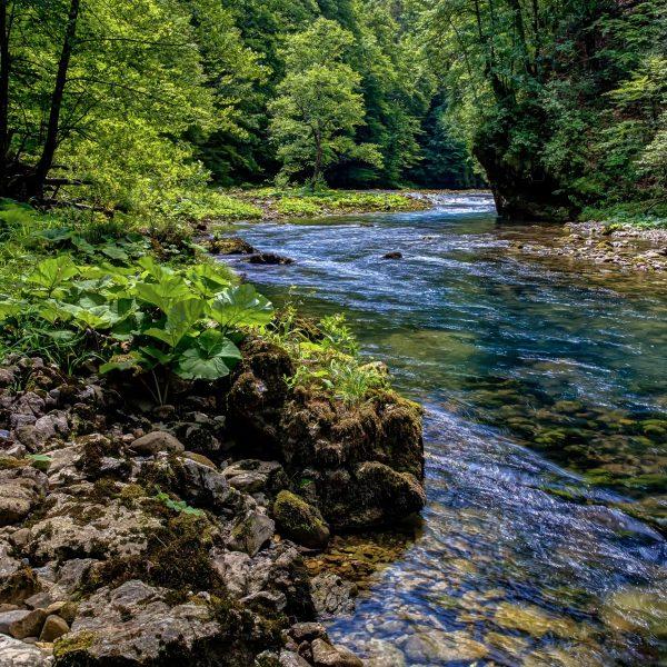 Risnjak-national park-river Kupa, autor: Stjepan Stimac
