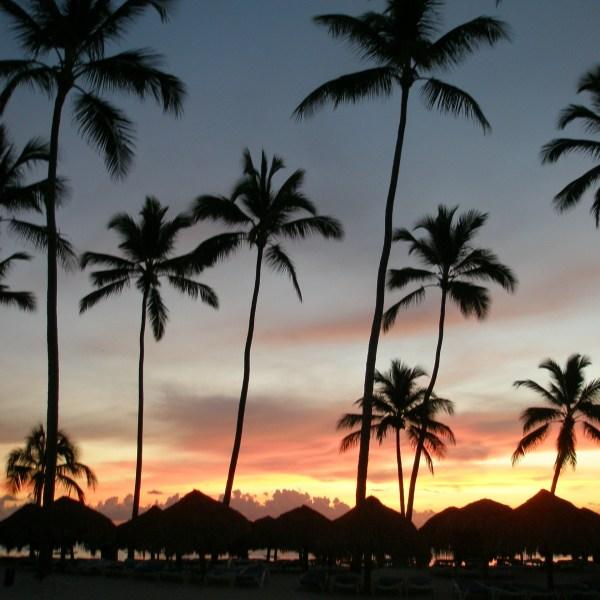 Dominican Republic-palms-Pointers-Travel-DMC