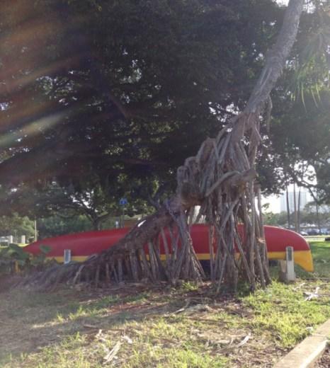 Crazy tree.