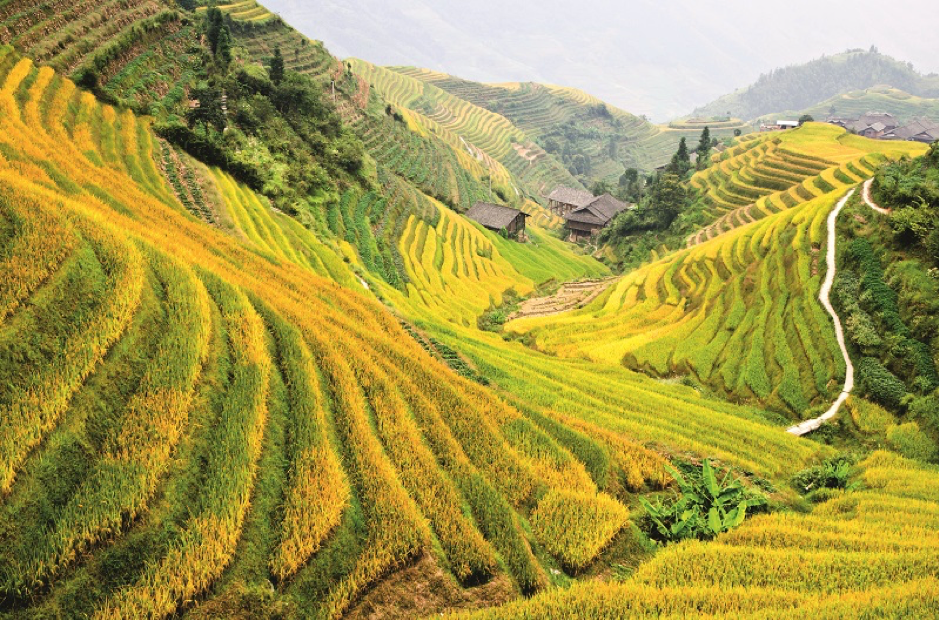 thailand agricultural investments