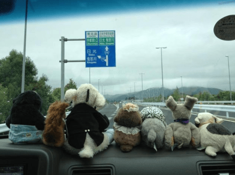 Stuffed Animals2