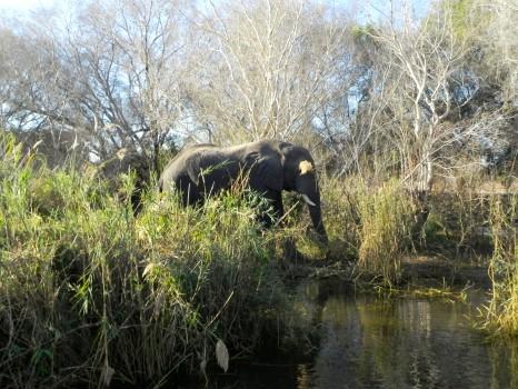 Elephant Hills Hotel Victoria Falls Zimbabwe14