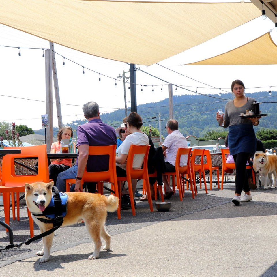 dog friendly restaurants in point reyes