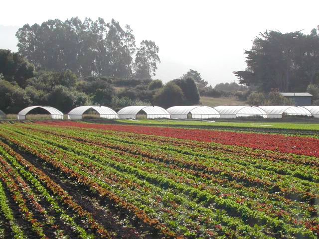 star route farm bolinas