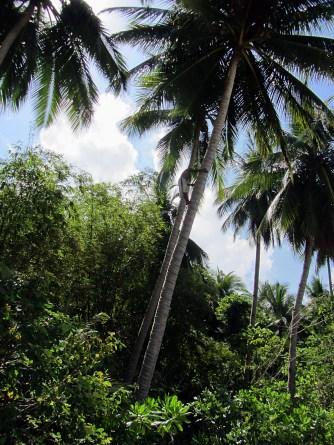 Port Baton