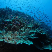 Pretty Reef