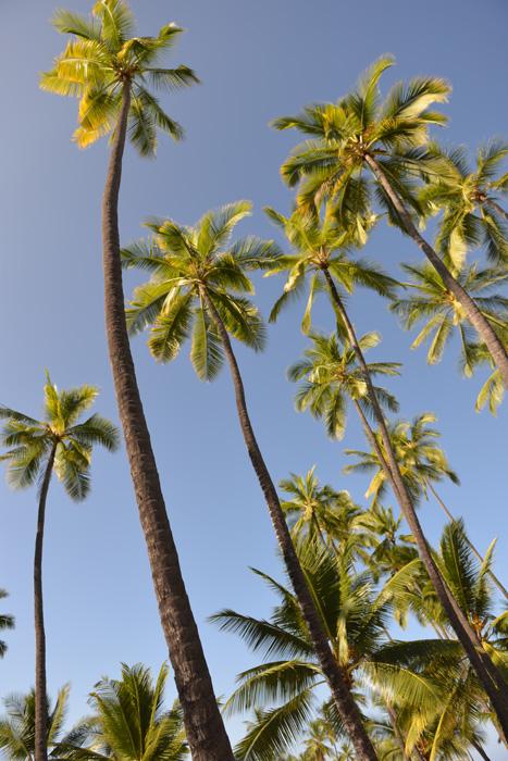 hawai-s31