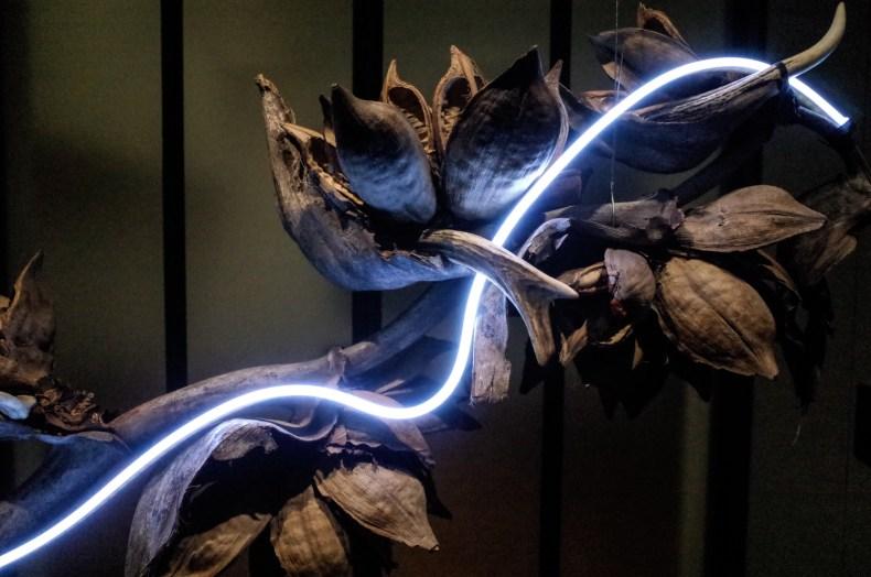 植物と灯り