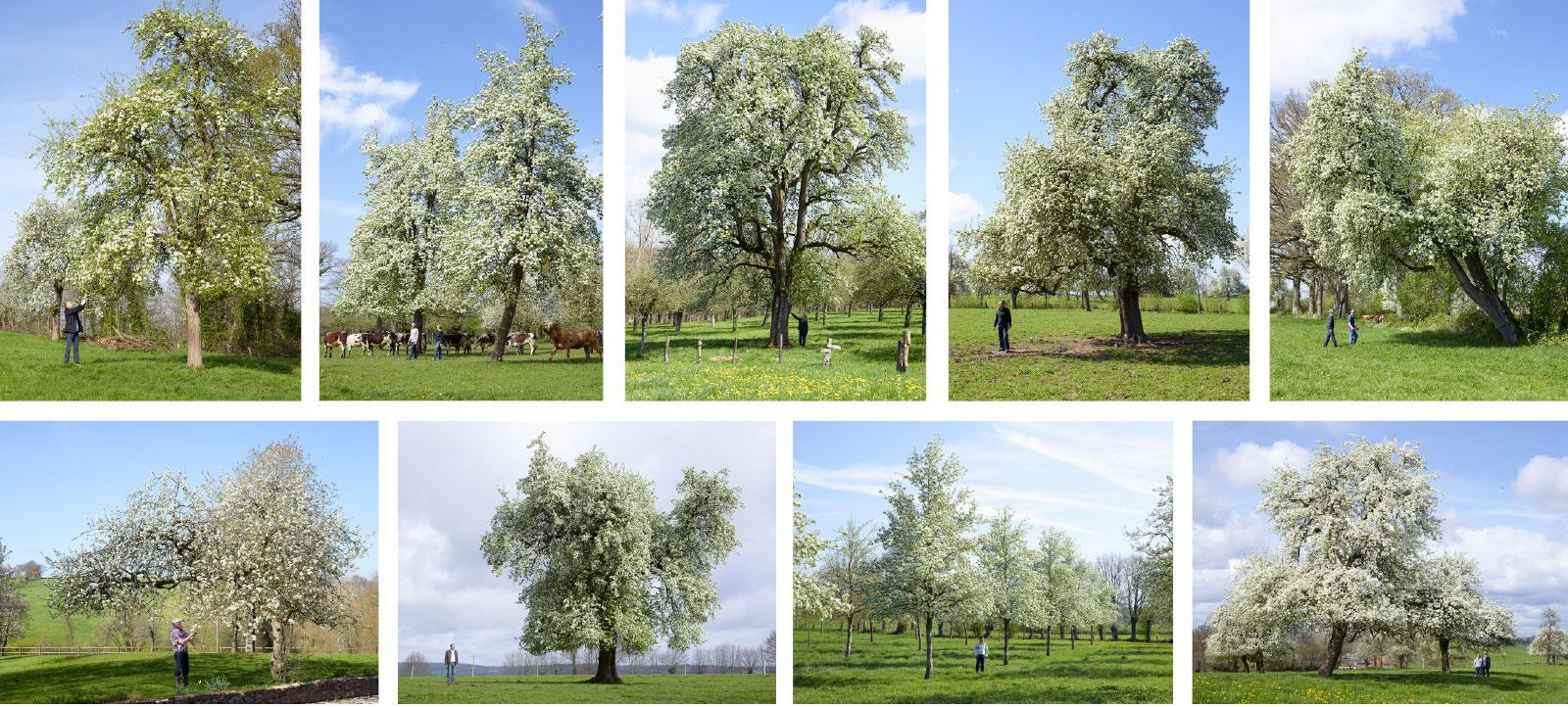 Photos Charles Fréger - Des hommes et des grands arbres
