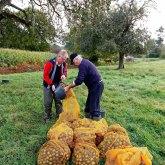 Rammassage des poires