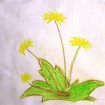 Illustration du profil de Aude T