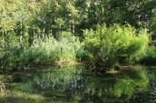Pond in arboretum