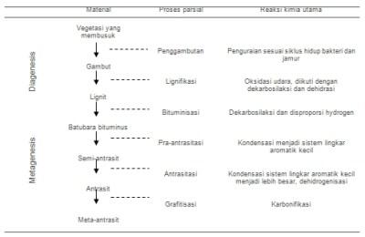 Tahapan dan Proses Terjadinya Batubara | Pulenesia