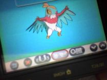 New Hawlucha Screen