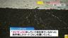 【ポケモンGO】新情報!小4男児死亡事故で運転手は○○を解除してプレイしていたことが判明