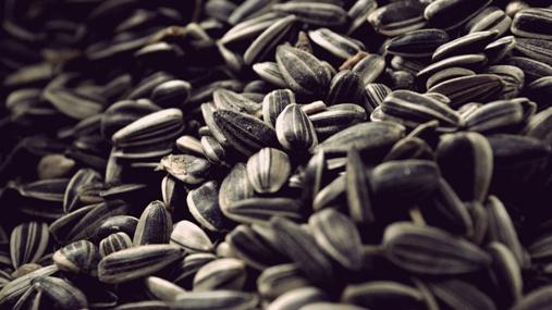 Полезная зараза: Можно ли попроавиться от семечек подсолнуха?