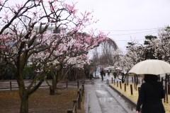 120414-01-松本城-42