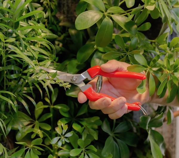 Sécateur précision pour plantes