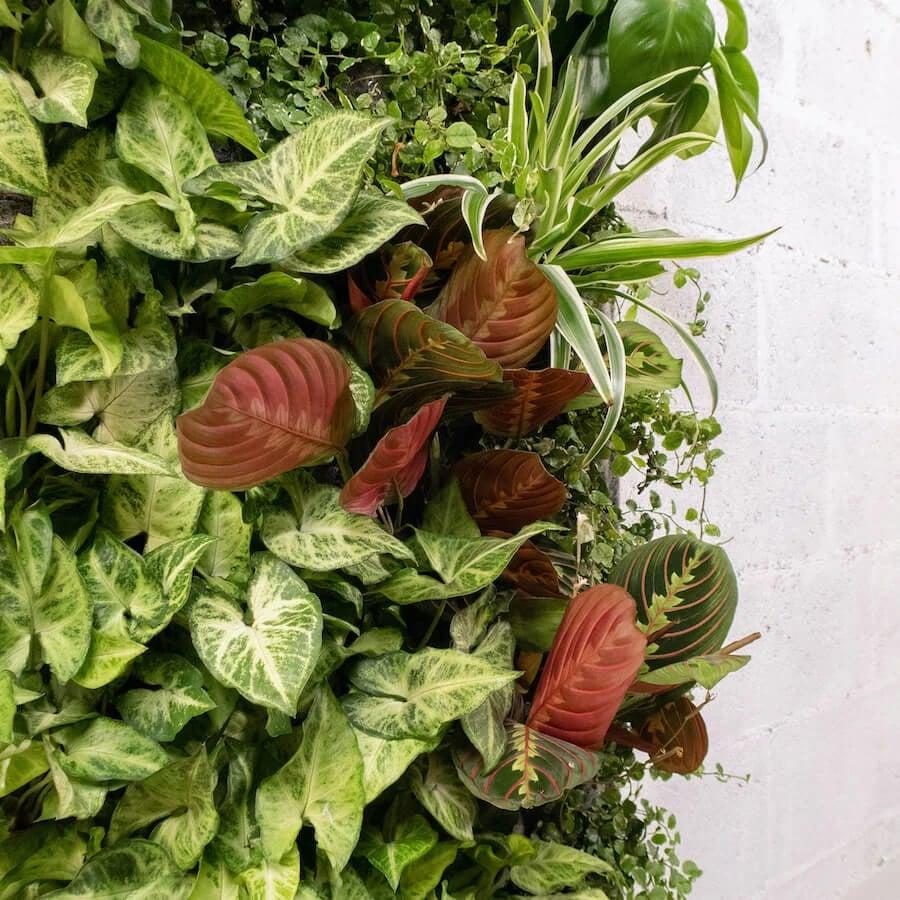 Mur végétal 100% Naturel