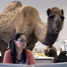geico-camel-hump-day-commercial