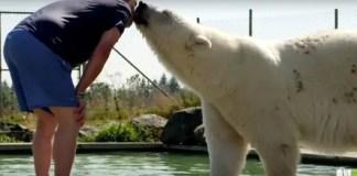 do polar bears eat humans