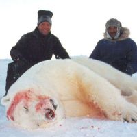 Are Polar Bears Going Extinct? | Why are Polar Bears Going Extinct?