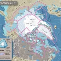 Top 59 Questions about Polar Bears   Polar Bear FAQs