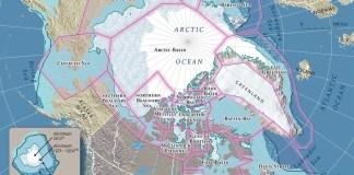 polar bear faqs