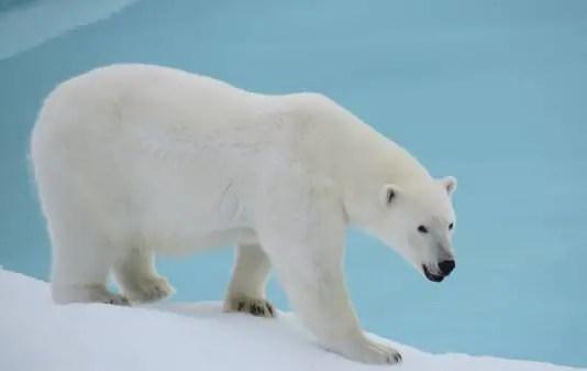 polar bear habitat for kids