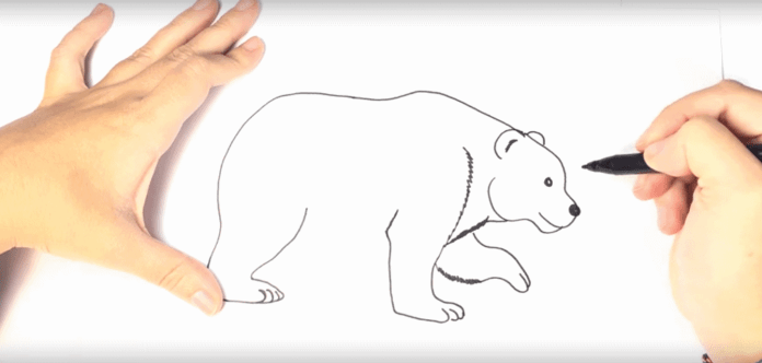 How To Draw A Polar Bear For Kids Super Simple Steps Images Videos Polarbearfacts Net
