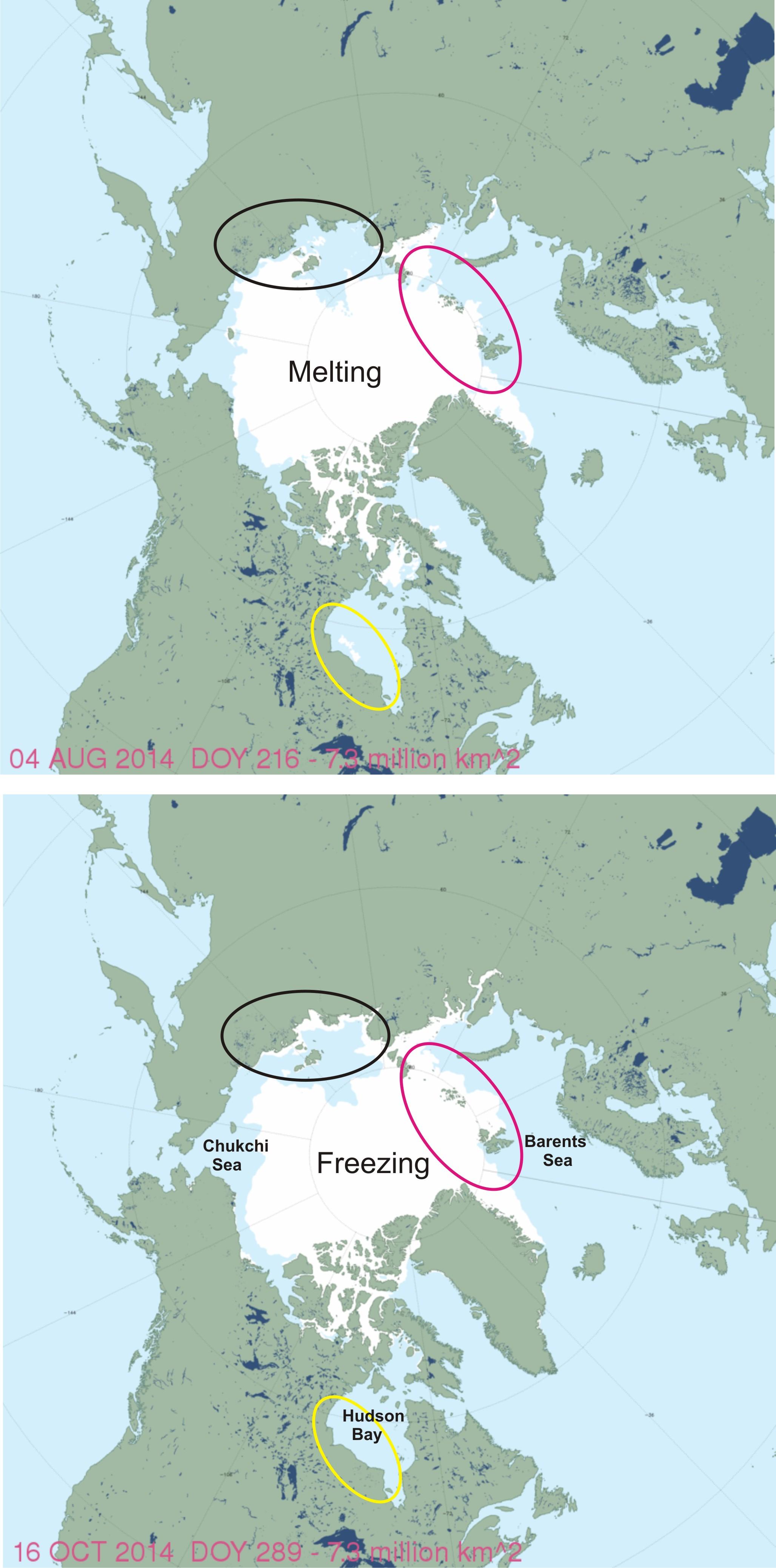 Polar Bear Habitat Update Regional Differences Melting