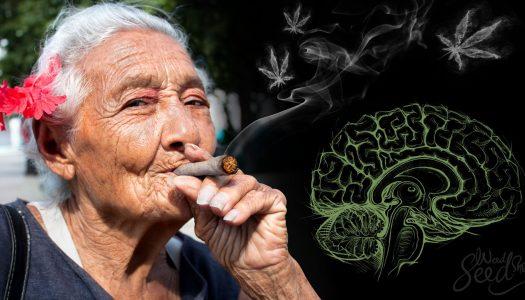 Mariguana legal para todos, propone Morena en el Senado