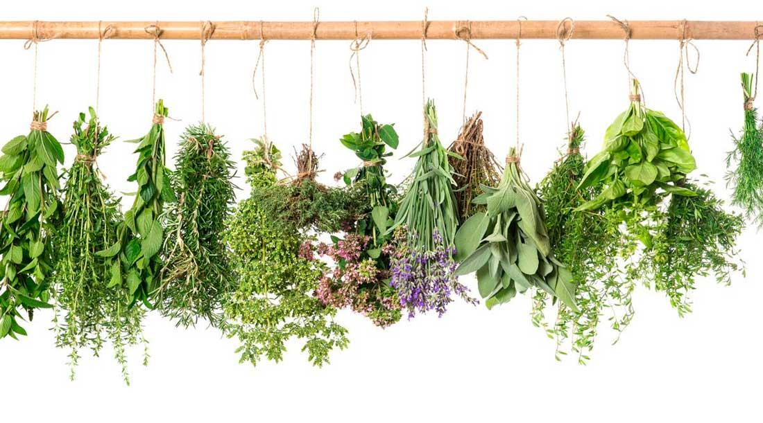 витамины в травах