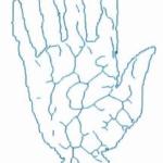 Schema eines Handvenenbildes; Quelle https://www.handvenenerkennung.com/