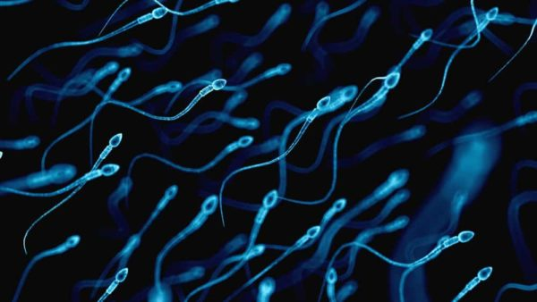 adn sperme