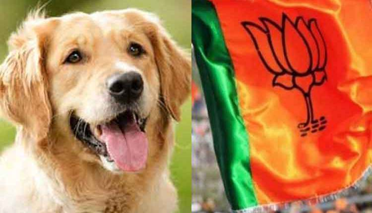 dog-and-bjp