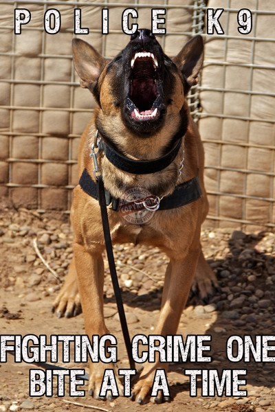 police canine poster