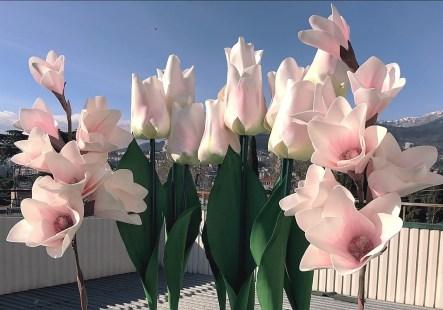 Ростовые тюльпаны