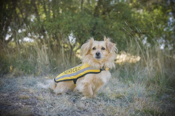 Friendly Dog Collars Nervous Coat and Harness Review - Polish and Paws