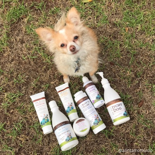 Bonsai loving the Dr Zoo pet skin and fur care range