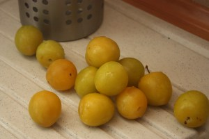 white plums, yellow plums