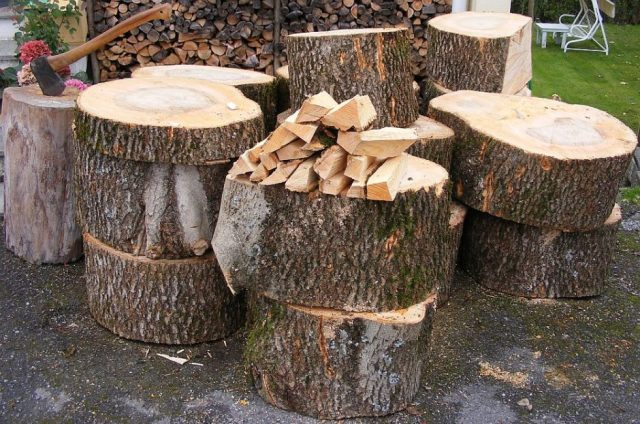 old ash tree sliced and ready for chopping