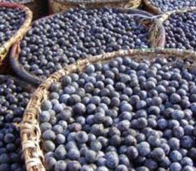 Brazilian Acai Berry
