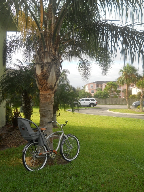 save expenses on insurance and cars
