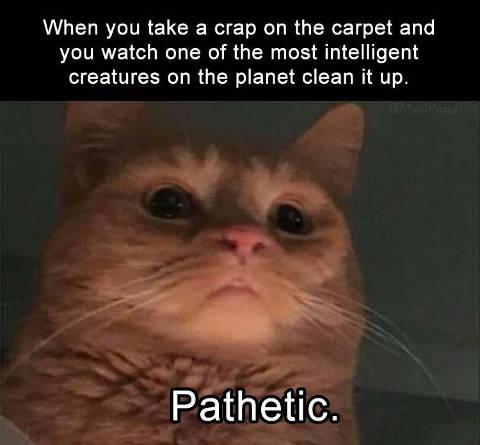 cat-most-intelligent-creatures-cleaning-crap-pathetic