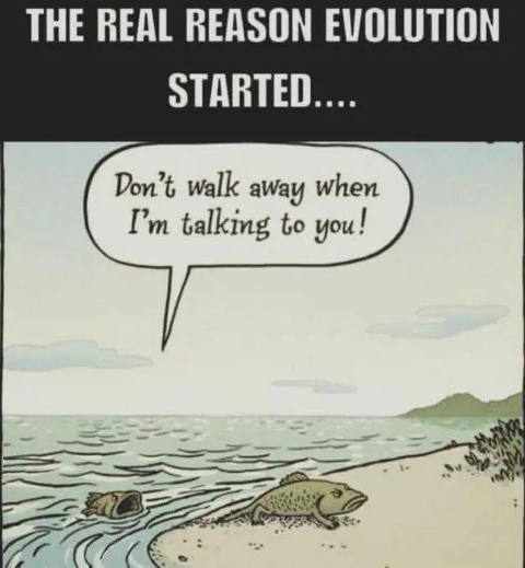 real-reason-evolution-started-fish-spouse