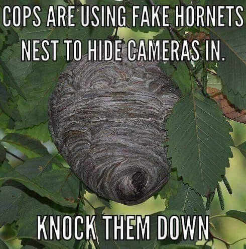 cops-using-fake-hornets-nests-to-hide-cameras-knock-them-down