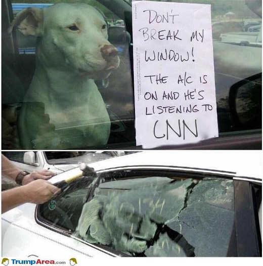 dog-listing-cnn-ac-break-window