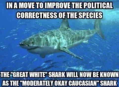 politically-correct-shark